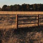 0_Pasture02