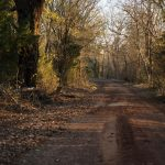 0_Red-Clay-Dirt-Road-02_small