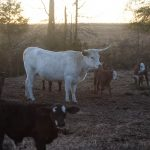 Bullard_Pastures_Hay_Smells_02