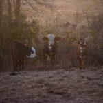 Bullard_Pastures_Hay_Smells_04