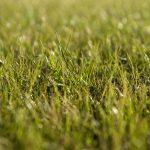 fresh-cut-grass