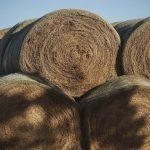 the-hay-smell-i-wnat