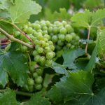 03242021_kiepersol_winery_4