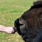 04112021_310_bison_ranch_10