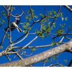 zach-canva-birds