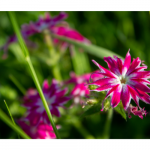 zach-canva-flower