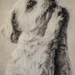 doggy-up-close-2-1